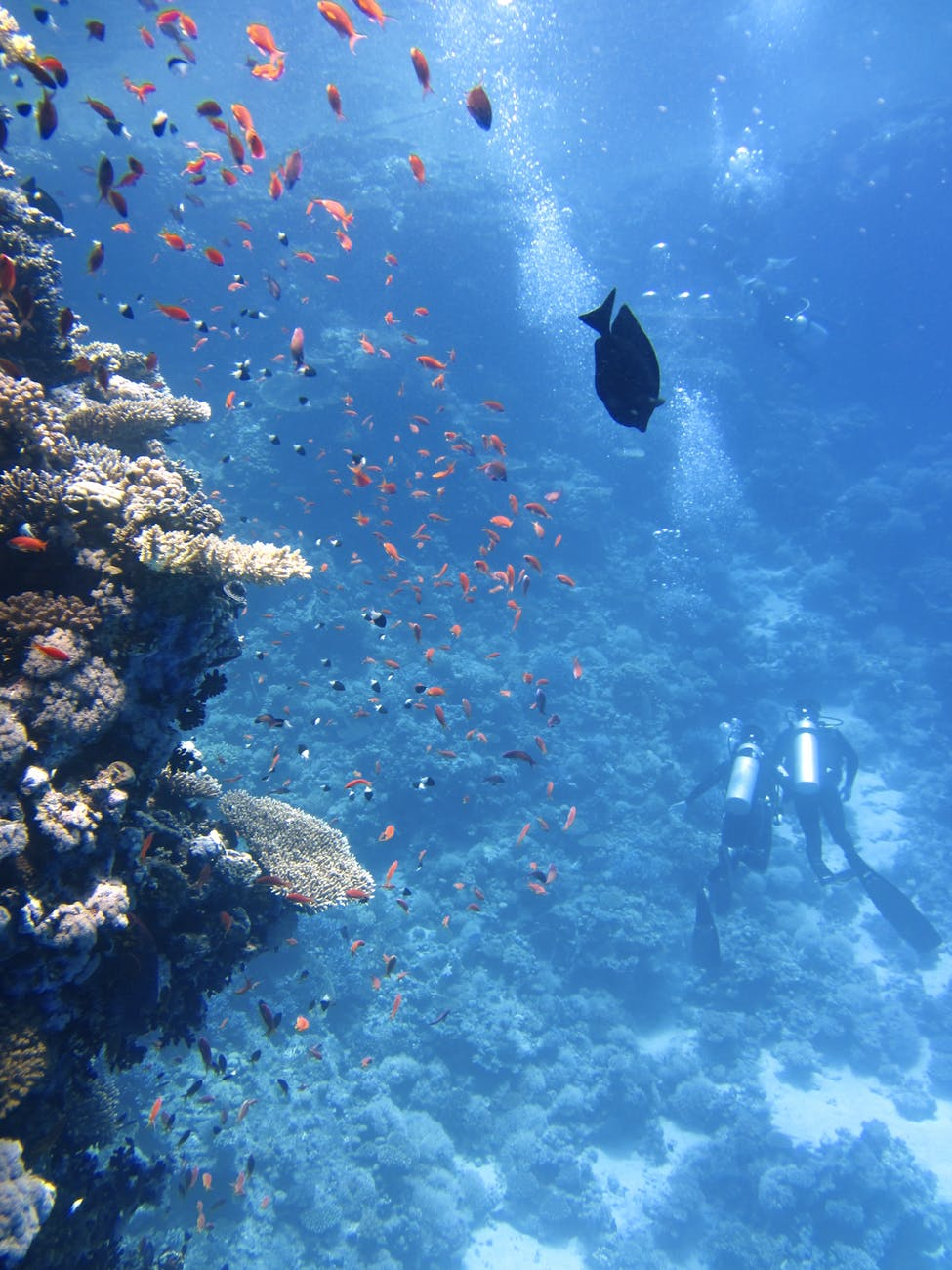 Recommendation of diving spot - Red Sea